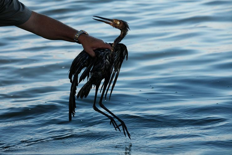 Sparkling waters hide some lasting harm from 2010 oil spill