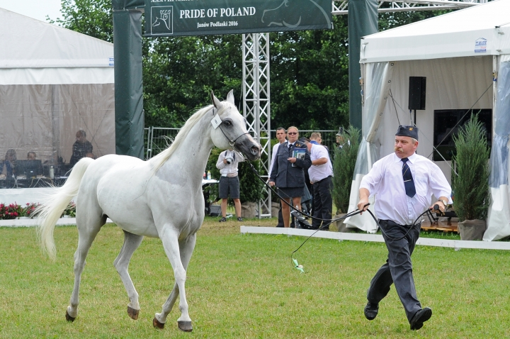 Polish horse auction sales much lower after government purge